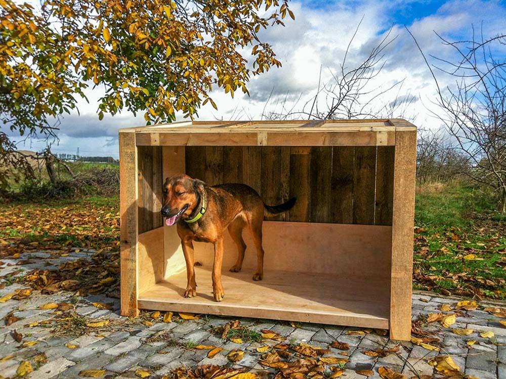 Hondenhok 1